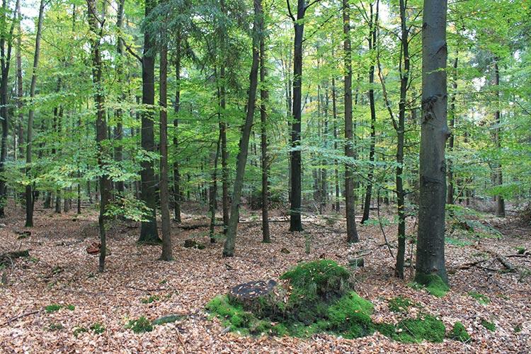 """20.06.2017 – Gebietsmanager Michael Siefker informiert die Forstbetriebsgemeinschaft Bramsche über das FFH-Gebiet """"Gehn"""""""