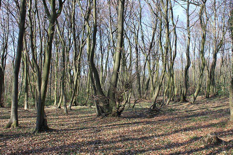 """Informationsveranstaltung zum FFH-Gebiet """"Teutoburger Wald, Kleiner Berg"""" organisiert durch die Untere Naturschutzbehörde"""