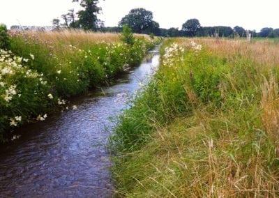 Information über Gewässerrand- und Uferstreifen