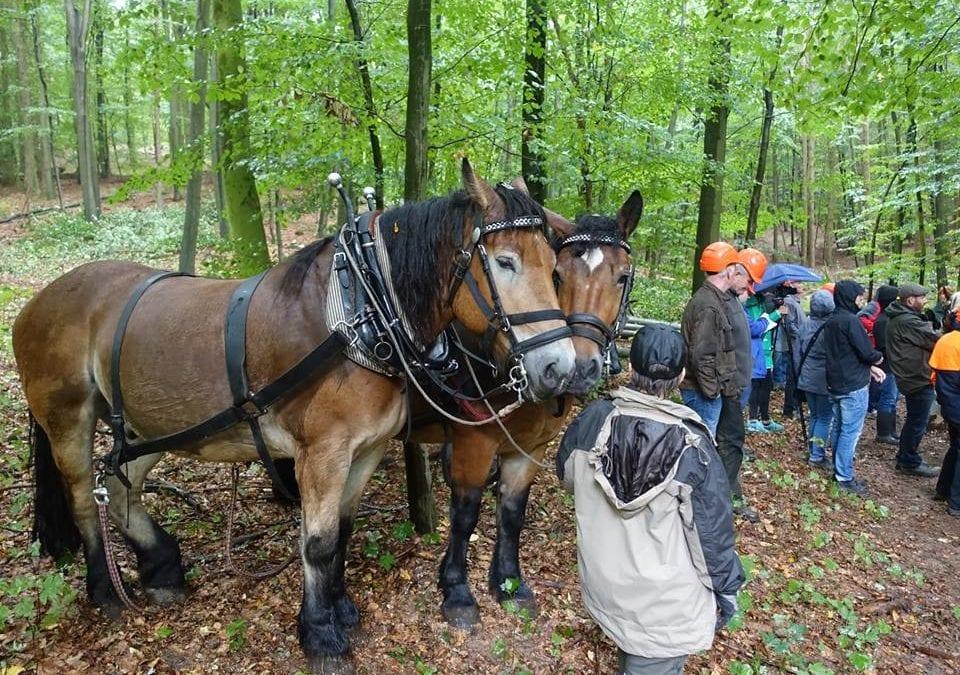 Kooperationstag Waldbau in Bad Iburg