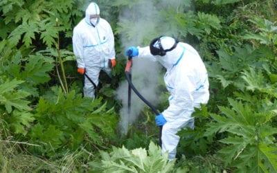 Mit Heißwasserdampf gegen invasive Neophyten