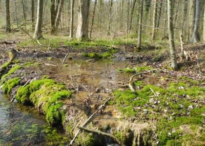 Biotopvernetzung in den Auen am Oberlauf der Hase bei Wellingholzhausen