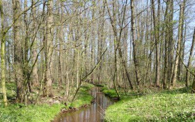"""Veröffentlichung der LSG-Verordnungen """"FFH-Gebiet Hüggel, Heidhornberg und Roter Berg"""" sowie """"Bäche im Artland"""""""